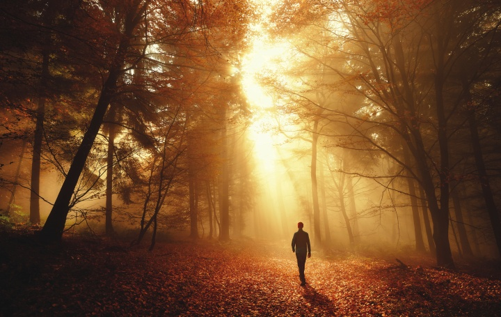 A person walking in the forest.